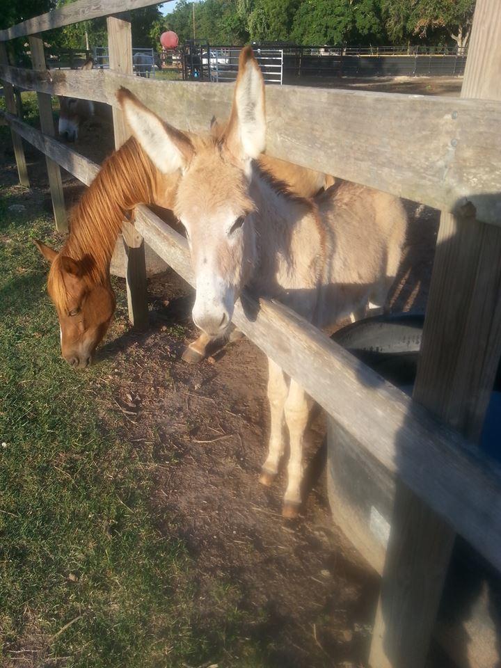 Habitat for Horses baby donkey