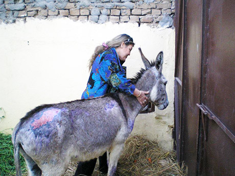 abused donkey in Egypt