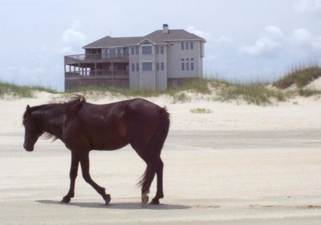 Outer banks wild horses and development