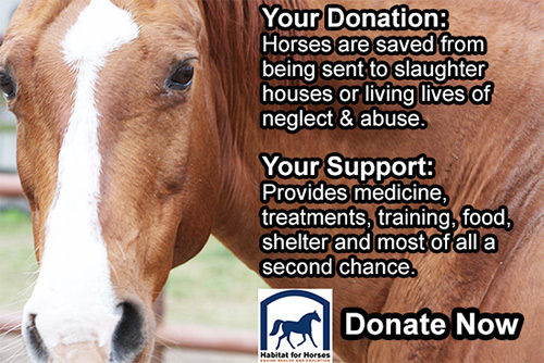 horse facing you - support donate to habitat for horses