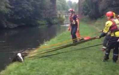 horse rescued from canal by firemen