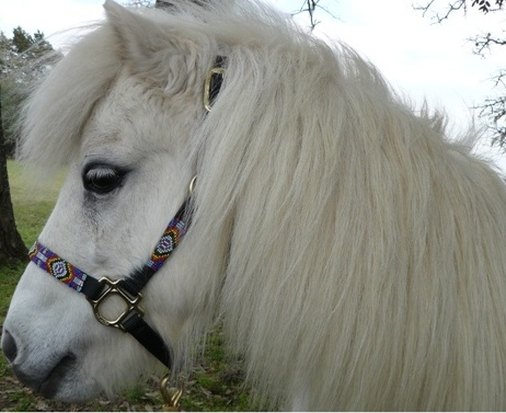 Snow Fire, Edie Skuca's mini pony