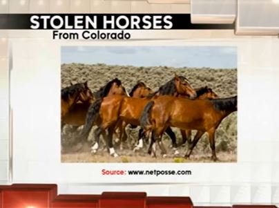 stolen horses headed to Mexican slaughter houses