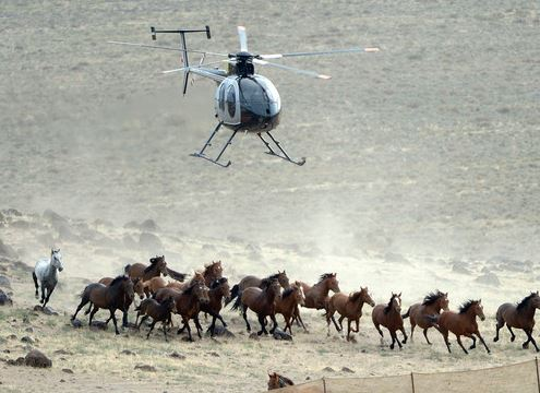 July 2014 BLM Round Up with helicopter