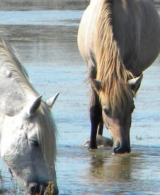 watering_horses