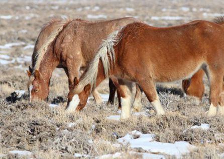 wild_horse_blm