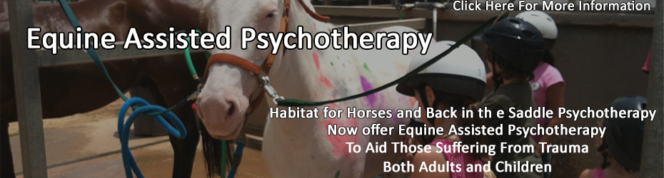Equine Assisted Psychotherapy now at Habitat for Horses