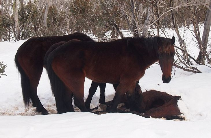 Cannibalistic horses...Really??