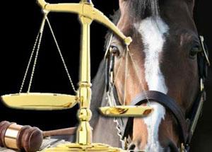 equine justice