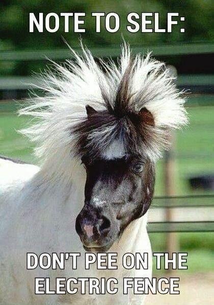funny horse meme