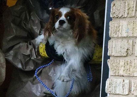 Nina Pham's dog Bentley
