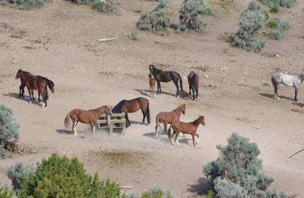BLM Wild Horses