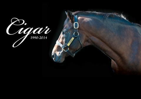 Cigar the race horse is dead