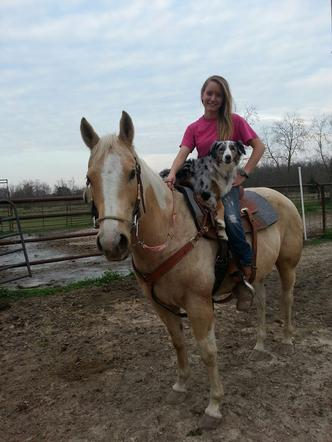 stolen_horse