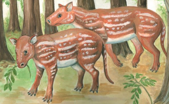 An artist's depiction of Cambaytherium thewissi. (Credit: Elaine Kasmer)