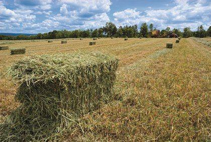 hayharvesting