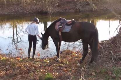 horse_afraid_of_water