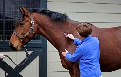 horseashot
