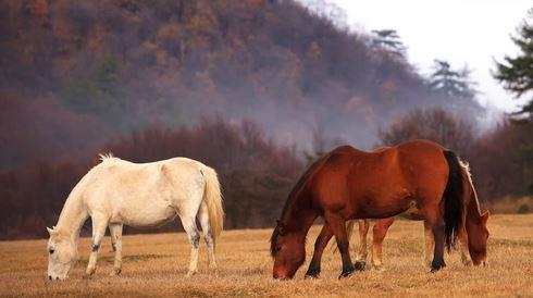 wyoming_wild_horses