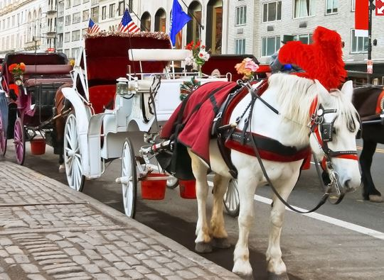 NYhorsecarriage
