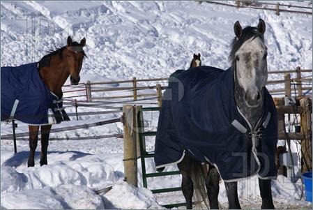 blanketsonhorses