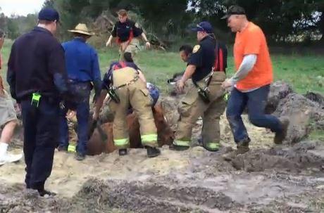 Horse Falls Into Florida Sinkhole