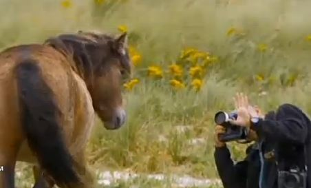 photographing_wild_horses