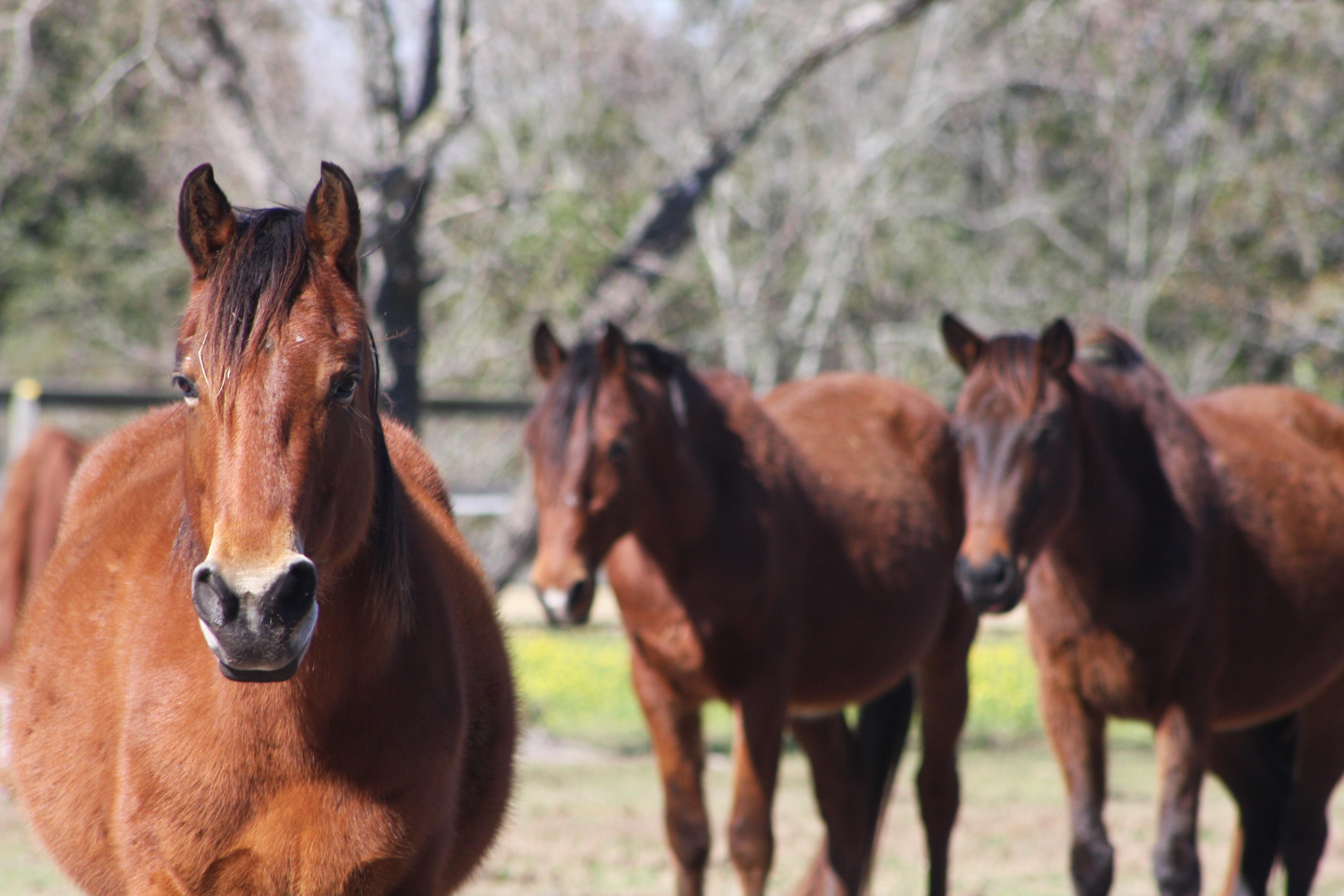 equine legislation