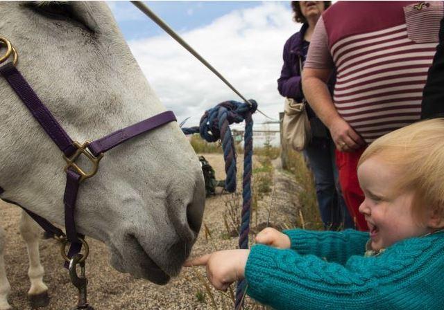 donkey and baby