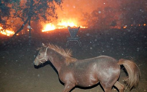 horse brush fire