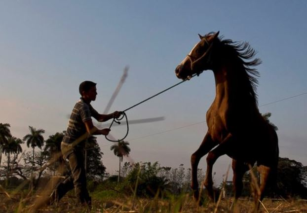 cuban horse trainers