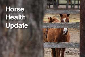 horse health update
