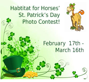 Habitat for Horses' St. Patrick's Day Photo Contest