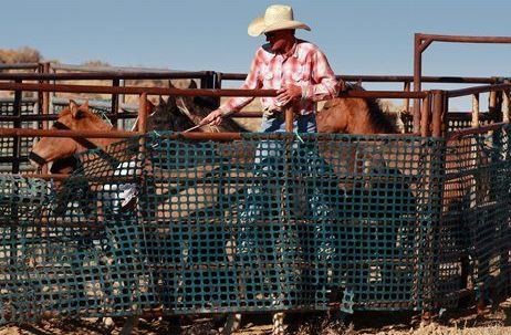 Contractor to move wild horses for blm
