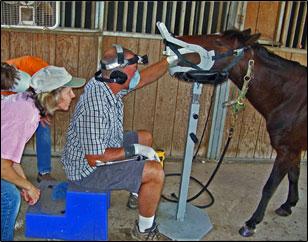 horse_dentistry