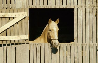 horse_in_stall