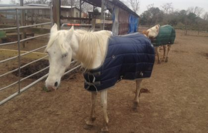 horsec