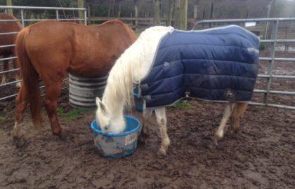 horsec2