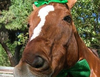 horseingreenhat