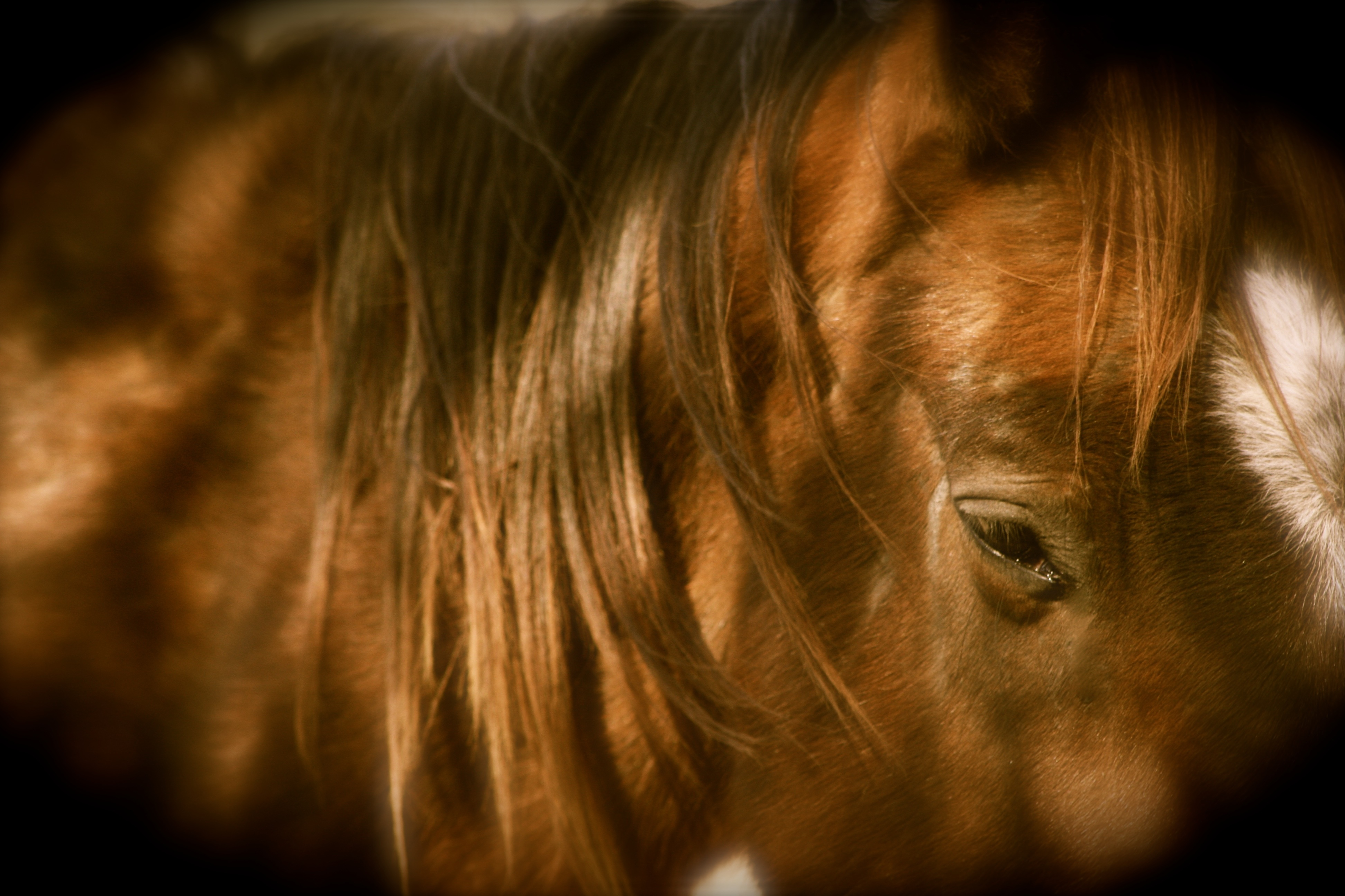 Stop  the slaughter of American horses - pass the SAFE act