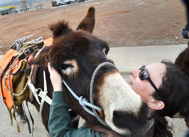 Rachel Karneffel hugs her donkey before taking off on walk around Cortez on March 3. (Sam Green, Cortez Journal)