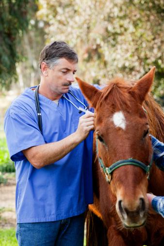horse_vet