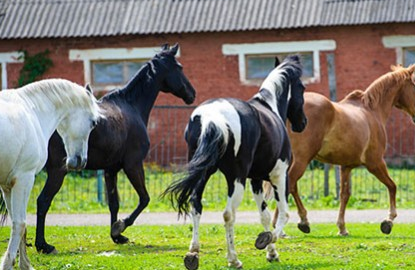 horses_in_arizona