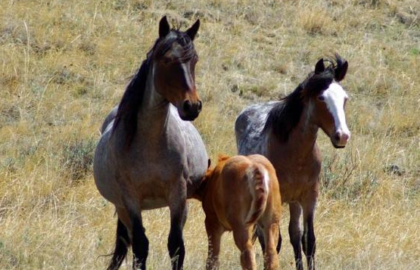 horses_living_on_Theordore_Roosevelt_National_Park