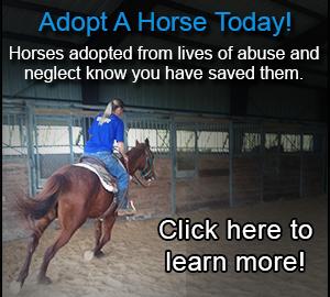 adopt_a_horse