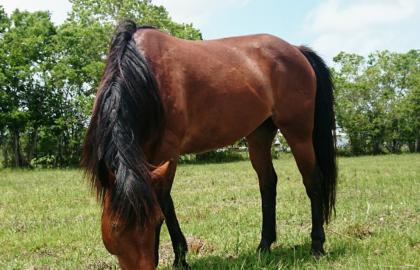 allegra_horse-_edited
