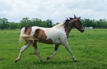 nacori_horse-pic-11_edited