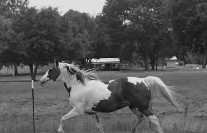 nacori_horse-pic2_edited
