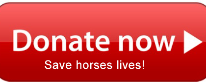 Donate-button-Red