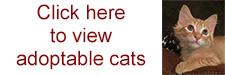 adoptable_cats_button